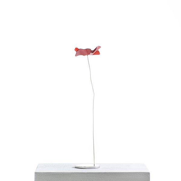 Opinion Ciatti - Papavero S -rosso
